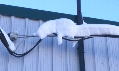 Readers send in photo of kitty on a wire