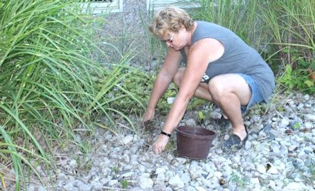 Kincardine woman on a mission to weed flower beds, rake the beach